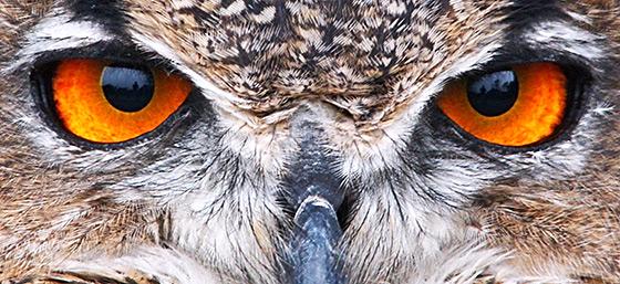 Twitter Eagle Eyes