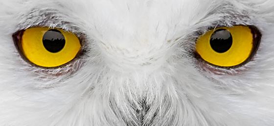 Twitter Yellow Intense Watching Eyes
